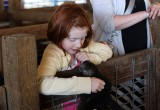 sheep-petting